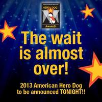 Hero Dog Awards Tonight